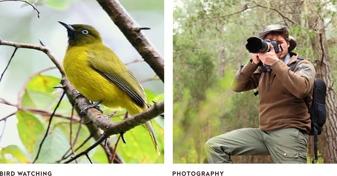 birds watching and natural-photography
